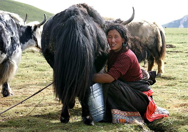 pink yak's milk